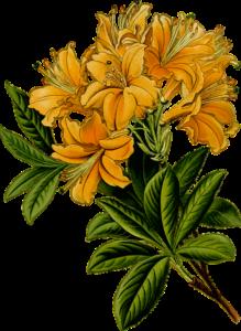 Basant Flower